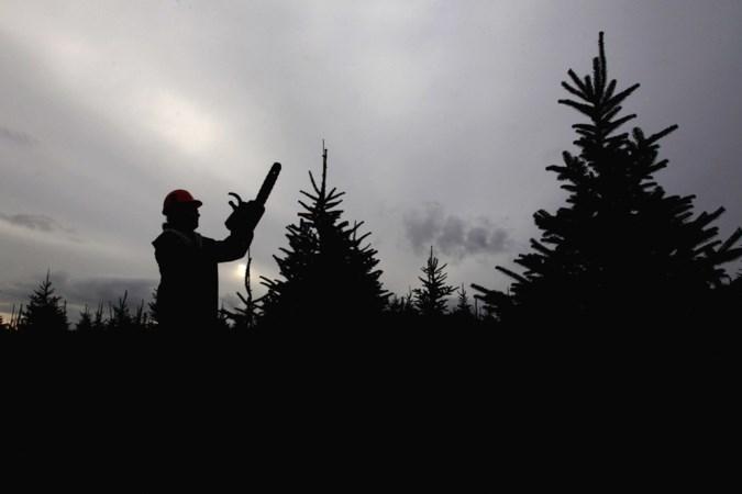 Stichting van speeltuin Hunsel aansprakelijk voor zware val uit kerstboom in 2013