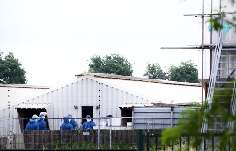 Ruiming van 40.000 nertsen bij nertsenfokkerij in Ysselsteyn begonnen