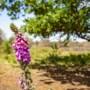 Natuurvrienden Schinnen-Spaubeek vieren 30-jarig jubileum