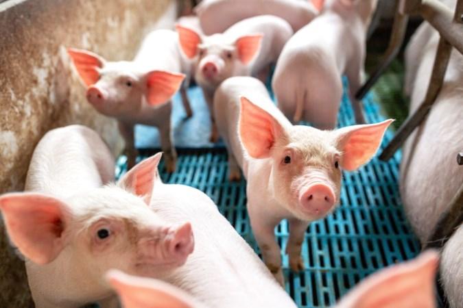 Miljoenen extra naar duurzamere landbouw in Limburg