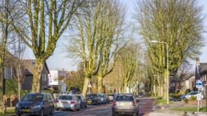 Bomen mogen niet wijken voor inritten en zonneweides in Venray