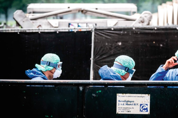 Geeft het coronavirus nertsenfokkers de laatste zet?