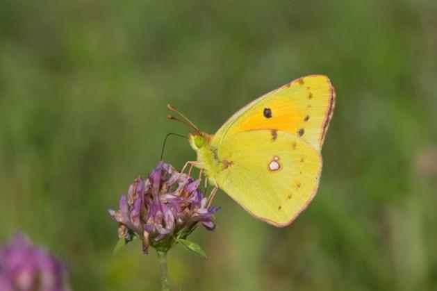 Natuurmonumenten start met vlinderexcursie op Sint Pietersberg voor kleine groep