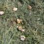 Vogelbeschermers Nederweert roepen op broedende vogels te ontzien tijdens het maaien van sloten en bermen