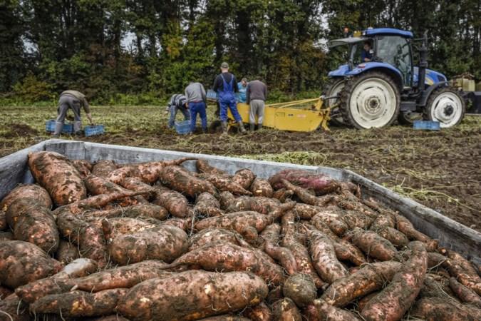 'Een kantelpunt richting een duurzamere landbouw in Limburg'