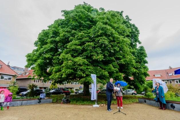Tuinfestival Struinen in de Tuinen strijkt neer in Sittard-Geleen, Maastricht, Roermond en Venlo