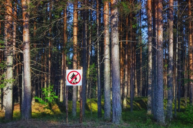 Roken verboden in Weerter bossen en natuurterreinen