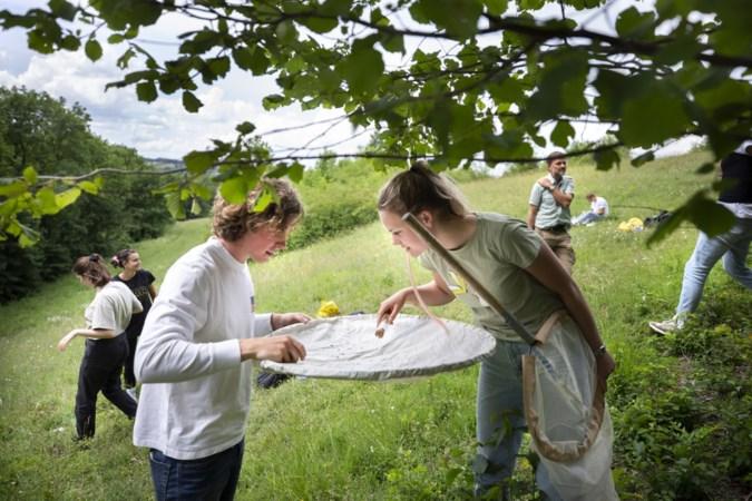 Veldonderzoek UvA: insecten hebben het naar hun zin in kalkgrasland bij Eyserbos