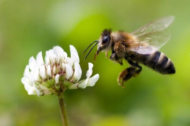 'Grote financiële risico's bij afname biodiversiteit'