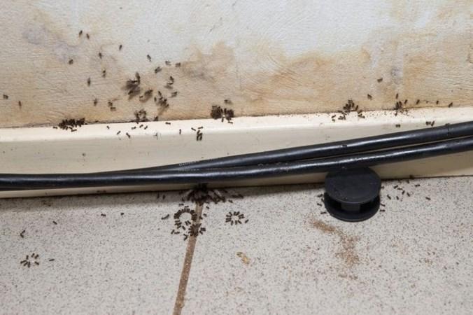 Ook zoveel last van mieren rondom je huis? Zo kom je ervan af!
