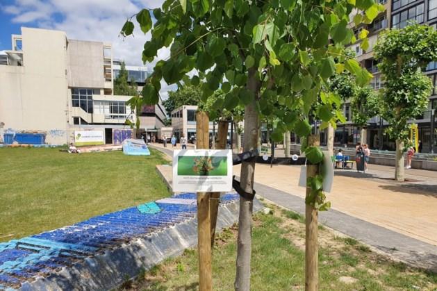 Antiracismeboom illegaal geplant in Heerlense stadstuin