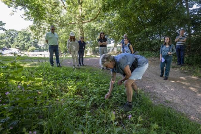 Meester-herborist Van der Linden: kennis van kruiden om ons heen is weg