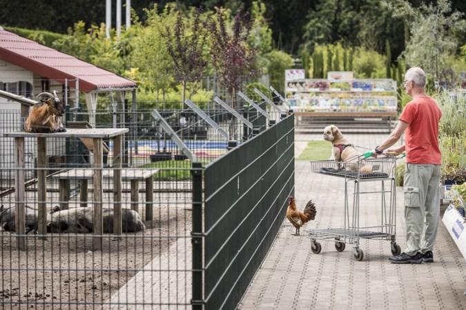 Dieven brengen bezoek aan kinderboerderij in tuincentrum: Vlaampie en Teun verdwenen. 'Wat restte was een plas bloed'.