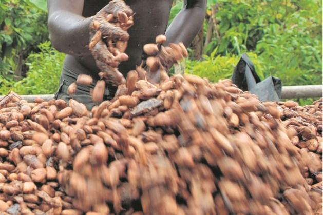 Steeds meer Nederlanders kopen fairtrade chocolade