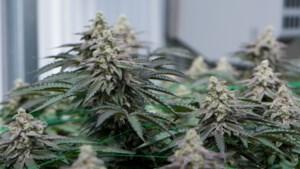 Stein wijzigt drugsbeleid: stoffen voor vervaardigen drugs al reden tot sluiting van panden