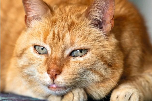 Hoe de getraumatiseerde Garfield een gezellige knuffelkous werd