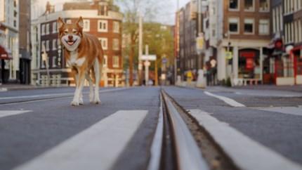 Maastrichtenaar maakt korte film over hond Jax in muisstil Amsterdam