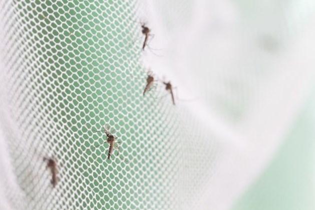 Stormloop op horren omdat we bang zijn voor een nieuwe muggeninvasie