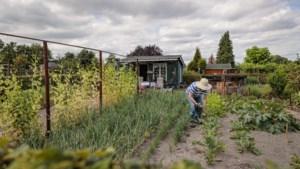 Vijftig jaar Volkstuinvereniging Roermond: 'Even de drukte van alledag vergeten'