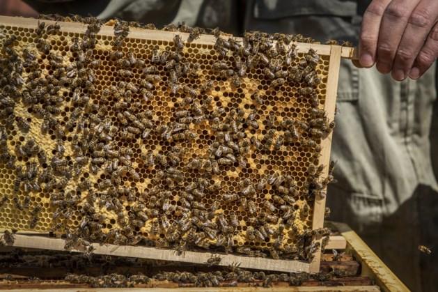 Brunssums Emmapark heeft bijen als nieuwe bewoners