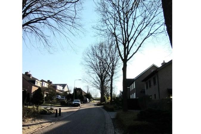 Bewoners vechten voor behoud van bomen in Slenaken