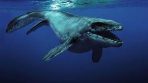 Onderzoek wijst op agressie onder mosasauriërs: Carlo blijkt bloeddorstig en verminkt