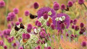 Vlinders tellen in tuin en op balkon