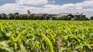 Horster raad wil zo snel mogelijk een visie voor de intensieve veehouderij