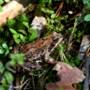 Amfibie- en vleermuisexcursie door de Anstelvallei