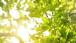 Vleermuizen en glimwormen houden bomenkap langs N280 in Roermond tegen