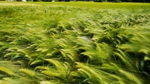 Politiek zet na tien jaar sein op groen voor bouw dorpsschool tussen Grevenbicht en Obbicht