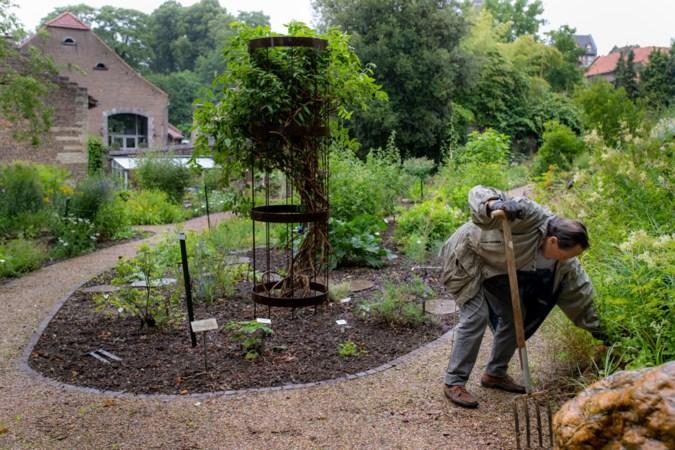 Nietsontziende buxusmot gaf aanzet tot compleet opnieuw indelen van botanische tuin in Elsloo