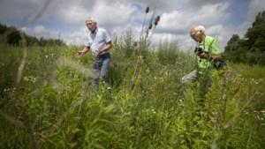 Proeftuin: op aantal plaatsen in Beekdaelen worden bermen minder gemaaid