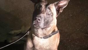 Politiehond plukt gevluchte verdachte uit achtertuin in Heerlen