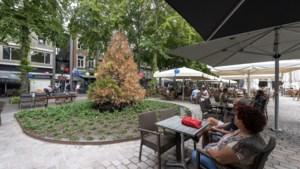 Mammoetboom Munsterplein Roermond wordt vervangen