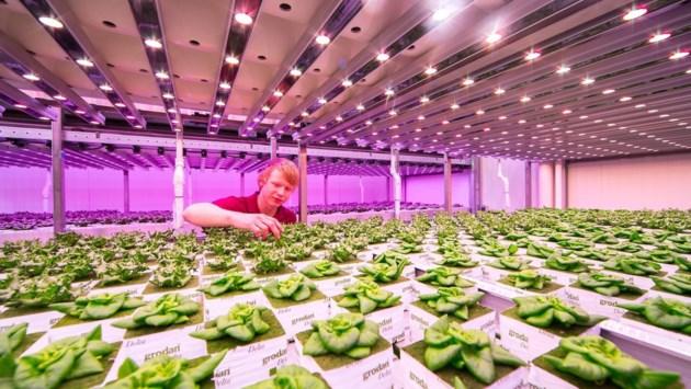 Venlo wordt hét kenniscentrum voor nieuwe landbouw en gezonde voeding