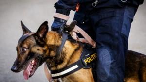 Scooterrijder negeert stopteken, politie zet met hond achtervolging in