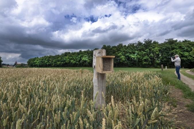 Mysterieuze houten palen in Beek moeten bijenpopulatie bevorderen