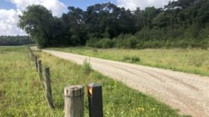 Uitwandelen: rust en verkoeling in de bossen