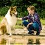 Filmrecensie Lassie: Ook een Duitse Lassie overtuigt