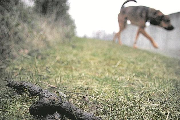 Echt-Susteren buigt zich over hondenpoepbeleid