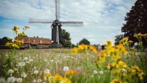 Doordat niet gemaaid kon worden is het Molenpark in Urmond opeens een kleurrijke weide vol kruiden en bloemen
