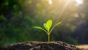Agritechbedrijf zet slimme camera in voor zaadveredelaars Limburg