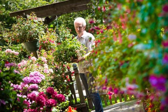 Limburgse fuchsialiefhebber heeft honderden soorten in zijn tuin staan: 'Het is een dankbare plant'