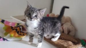 Dier van de week: groepje kittens