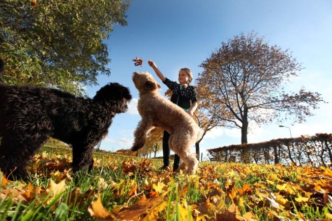 'Gras op hondenuitlaatplaatsen Sittard-Geleen moet korter wegens tekengevaar'