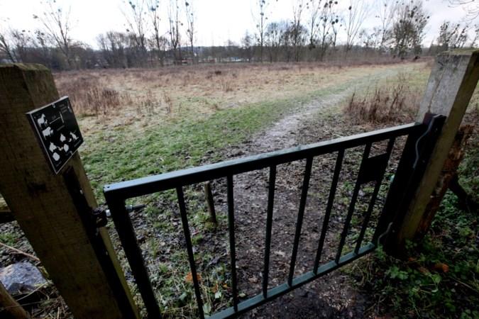 Twee agressieve konikpaarden in natuurgebied Ingendael afgemaakt