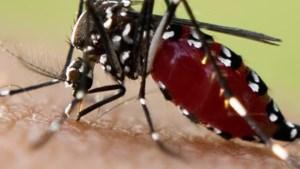 'Coronapandemie een wake-upcall voor bewustwording over risico's exotische muggen'
