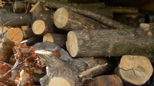 Dwangsom om illegale bomenkap Roermond te herstellen