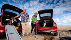 Hond in de auto? Zo doe je het goed